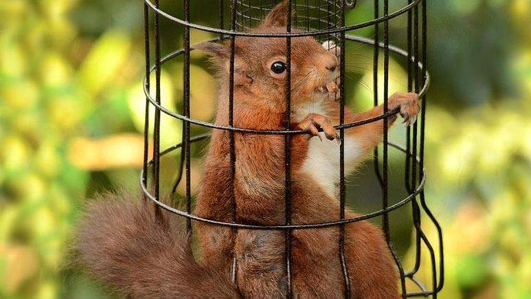 Keep squirrels away from birdfeeders