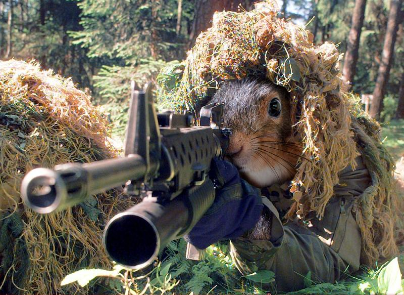 Air rifles are necessary if you want to kill squirrels with a pellet gun.