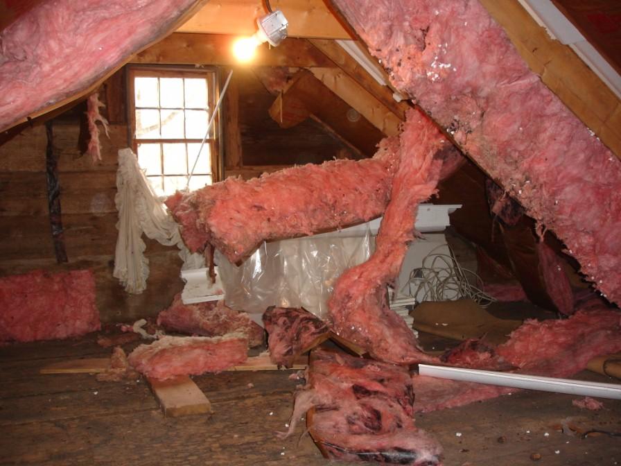 Attic insulation destroyed by squirrels