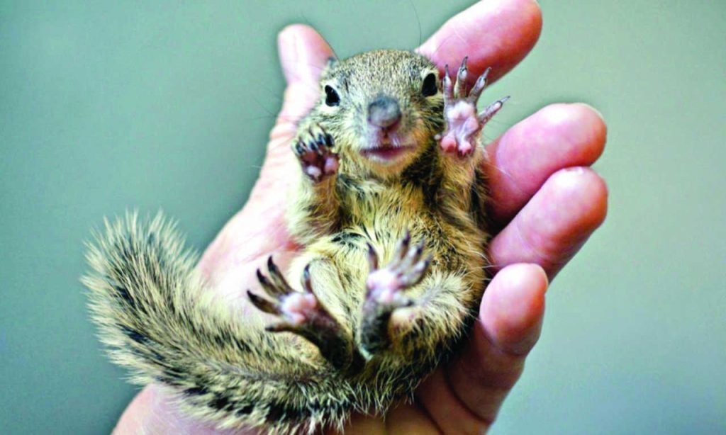 Baby squirrel with sharp claws.