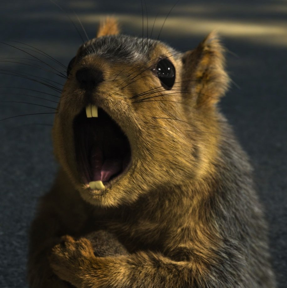 Another angry squirrel